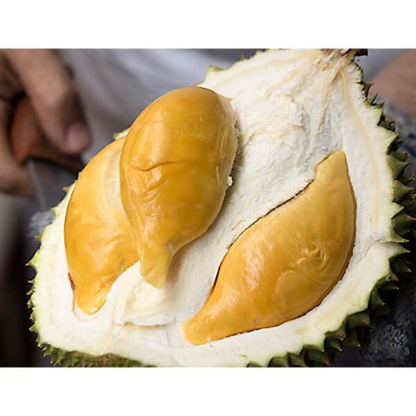D13 Durian in Singapore