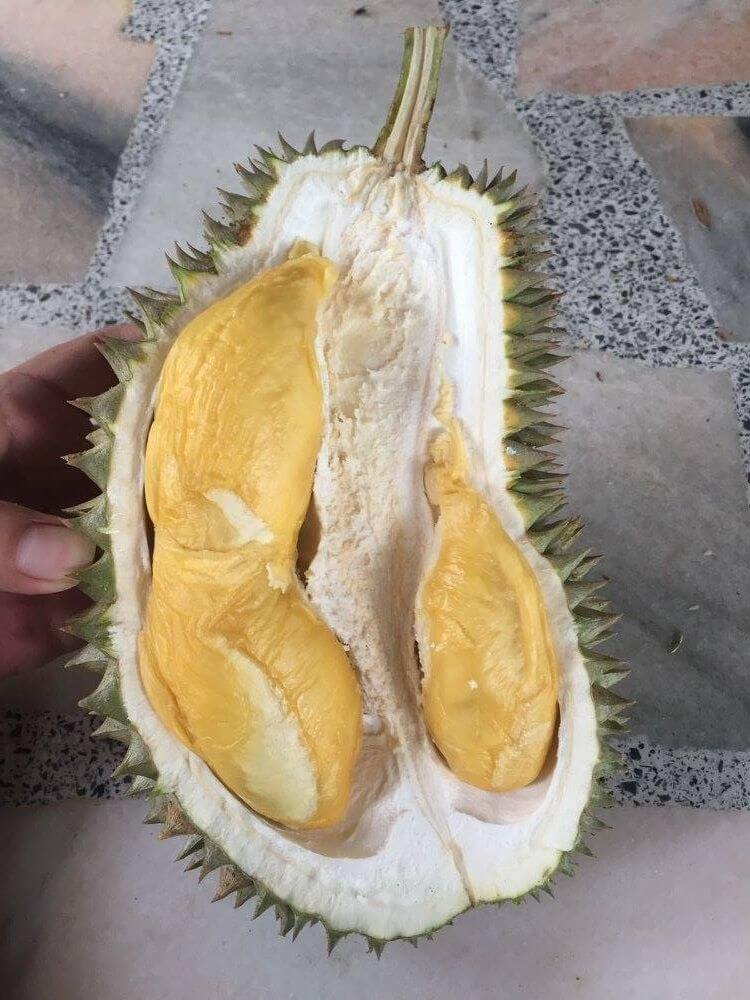 Hor Lor Durian in SIngapore